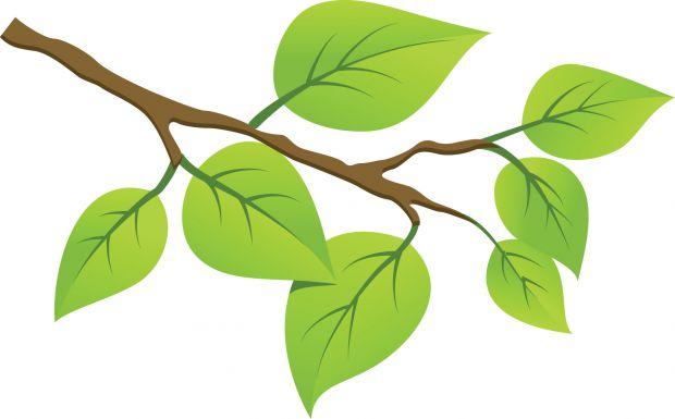 Веточки деревьев в рисунках